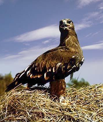 Орел - это символ религиозного возвышения