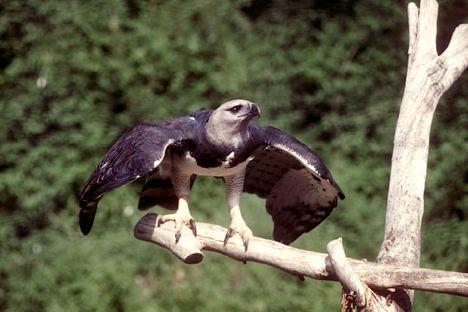 Как сделать птицу своими руками из перьев
